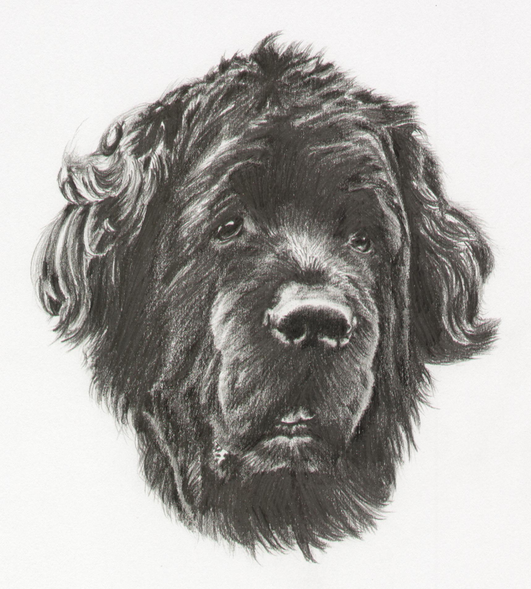 'Karluk' in graphite